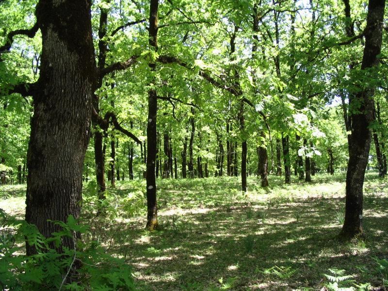 Δάσος είναι έκταση ακαλλιέργητου